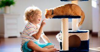Un enfant qui joue avec son chat